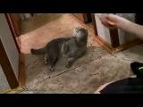 Смішні коти   Funny Cats1
